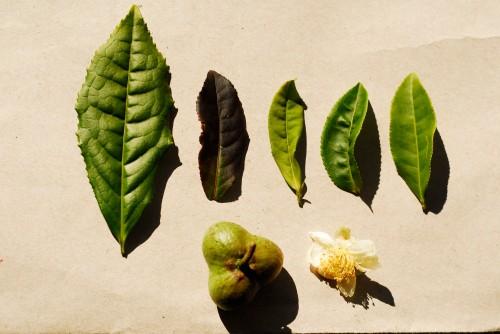 diferentes folhas