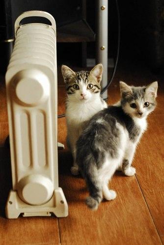 gatinhos espertos