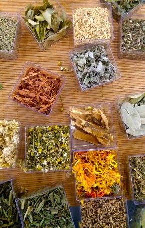 ervas-medicinais-peq